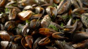 Sliding over sea mussels cooked with herbs stock video footage
