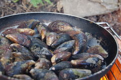 Sea mussels. Cooking fresh mussels in a pan on the fire Royalty Free Stock Photo