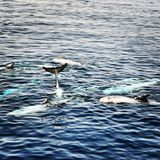 Baby whales in red sea, Egypt. Red sea love relaxation royalty free stock photo