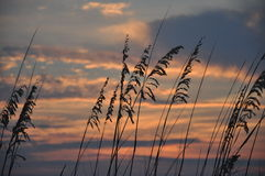 A Sea Oat Sunset. Sea Oats at sunset at St. Andrews State Park on Panama City Beach, FL royalty free stock photos