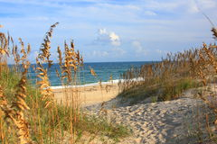 Sea Oats  and Beach. Sea Oats and Beach in the Outer Banks loacted in Salvo, North Carolina Royalty Free Stock Photo