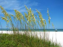 Sea Oats on the Beach Royalty Free Stock Photography