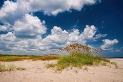 Sea Oats Stock Photography