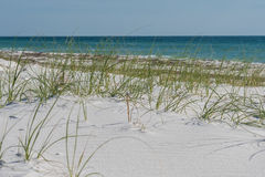 Sea Oats with Blue Gulf Waters Royalty Free Stock Photos