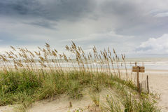 Sea Oats on Dune Royalty Free Stock Photos