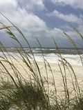 Sea oats and ocean. Sea oats at the beach Stock Images