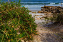Sea Oats and Rocks on the Shore Stock Image