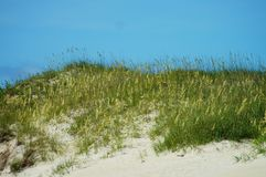 Sea Oats and Sand Dunes of the Outer Banks of NC Royalty Free Stock Photography
