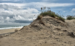 Sea oats and sand dunes on the Outer Banks Royalty Free Stock Photos