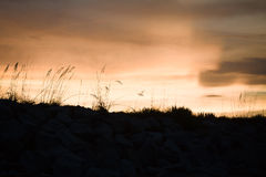 Sea oats silhouette at sunset. Sunset silhouette of sea oats at the beach stock images