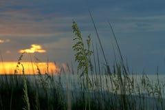 Sea oats at sunrise in Florida stock photos