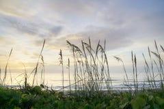 Sea Oats at Sunrise Stock Photo