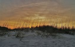 Sea Oats at Sunset. Sea oats along the coast of New Smyrna Beach at sunset stock image