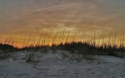 Sea Oats at Sunset. Sea oats along the coast of New Smyrna Beach at sunset Stock Image
