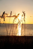 Sea oats with sunset. Beach with sea oats and a sunset Royalty Free Stock Image