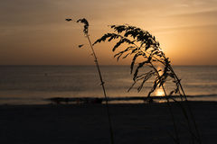 Sea Oats and Golden Sunset Stock Image