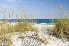 Sea Oats and Turquoise Waters Stock Images