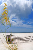 Sea oats under dramatic sky Royalty Free Stock Images