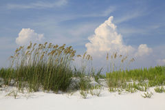 Sea Oats and a White Sand Beach on a Beautiful Cloudy Day Royalty Free Stock Photography