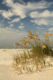 Sea Oats on a White Sand Beach in Florida on a Beautiful Cloudy Royalty Free Stock Photo