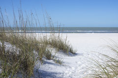 Sea oats and white sand dunes on beach in St. Petersburg, Florid Stock Photography