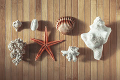 Sea objects on wood background. Stock Photos