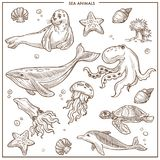 Sea and ocean animals or fish vector sketch. Sea or ocean animals and fishes sketch. Vector isolated cartoon seal, whale and octopus or squid, turtle or dolphin Stock Photography
