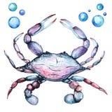 Big King Crab Handdrawing Watercolor Illustration a High Resolution stock illustration