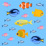 Sea and ocean fish colorful bright set. Tropical fhishes for any kind of design Stock Image