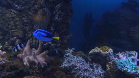 Sea and Ocean life. Wonderful underwater world. Fish in the aquarium. stock video footage