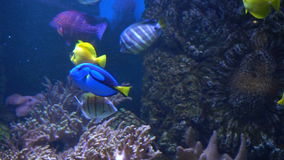 Sea and Ocean life. Wonderful underwater world. Fish in the aquarium. Wonderful underwater world. Fish in the aquarium. Many beautiful colorful fish. Sea and stock video footage