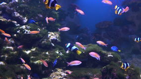 Sea and Ocean life. Wonderful underwater world. Fish in the aquarium. Many beautiful colorful fish. Slow motion Background stock video footage