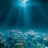 Sea or ocean seabed with coral reef. Underwater view. royalty free stock photo