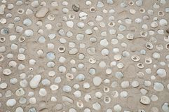 Sea ocean shell in beach sand pattern. Texture royalty free stock images
