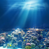 Sea or ocean underwater coral reef snorkeling or diving. Background