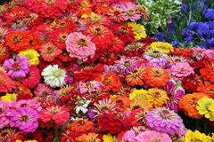 Sea Of Flowers Stock Image