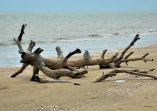 Sea and old wood Stock Image