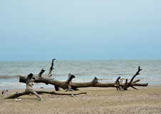 Sea and old wood Stock Images