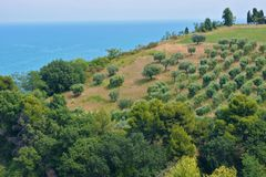 Sea and Olive trees Royalty Free Stock Images