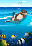Sea otter swimming in the sea. Illustration Stock Image