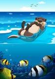 Sea otter swimming in the sea Stock Image