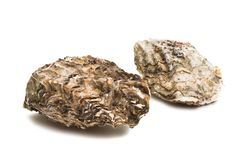 sea oyster royalty free stock image