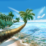 Sea palm Royalty Free Stock Photography