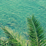 Sea and palm branch in vintage style. Stock Photos