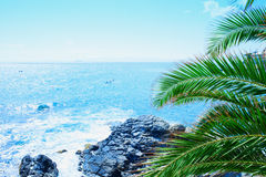 Sea with palm Royalty Free Stock Images