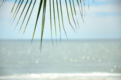 Sea and palm leaf Stock Photography