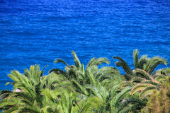 Sea and palm tree background Stock Photos