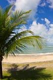 Sea, palm tree in Bahia Stock Photography