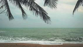 Sea palm tree and shore during storm weather in slow motion. 1920x1080. Hd stock footage