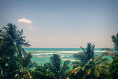 Sea and palm trees a clear blue sky Stock Photos